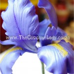 Cake artist, sugar artist, Vorna Valley, Midrand. Hand made sugar iris, sugar flower