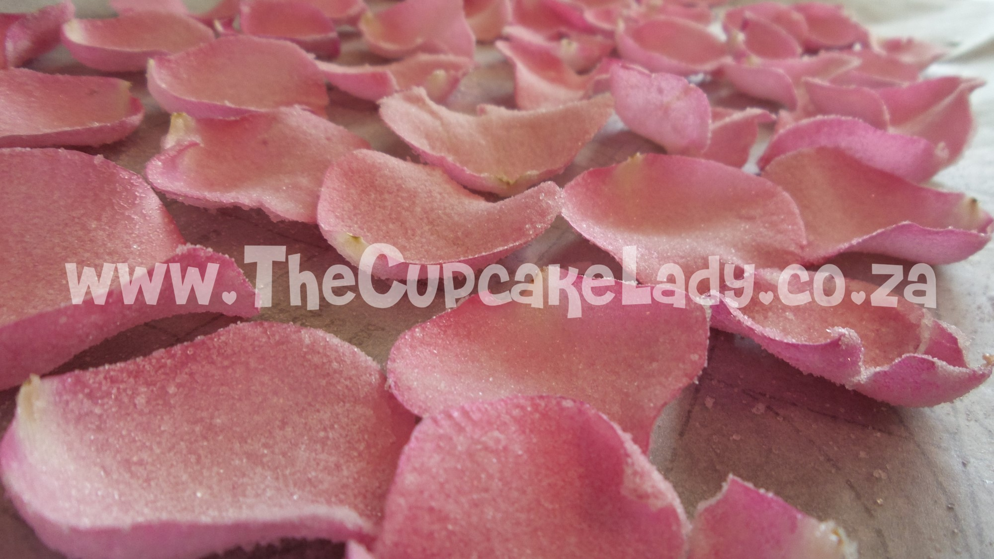 two tiered cake, chocolate and vanilla, pink velvet cupcakes, cream cheese icing, crystallised rose petal, sugar paste dog